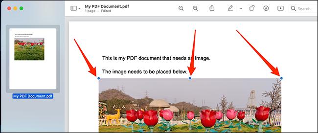 Verwenden Sie die Objektgriffe, um Ihr Bild in der PDF-Datei zu positionieren und seine Größe zu ändern.
