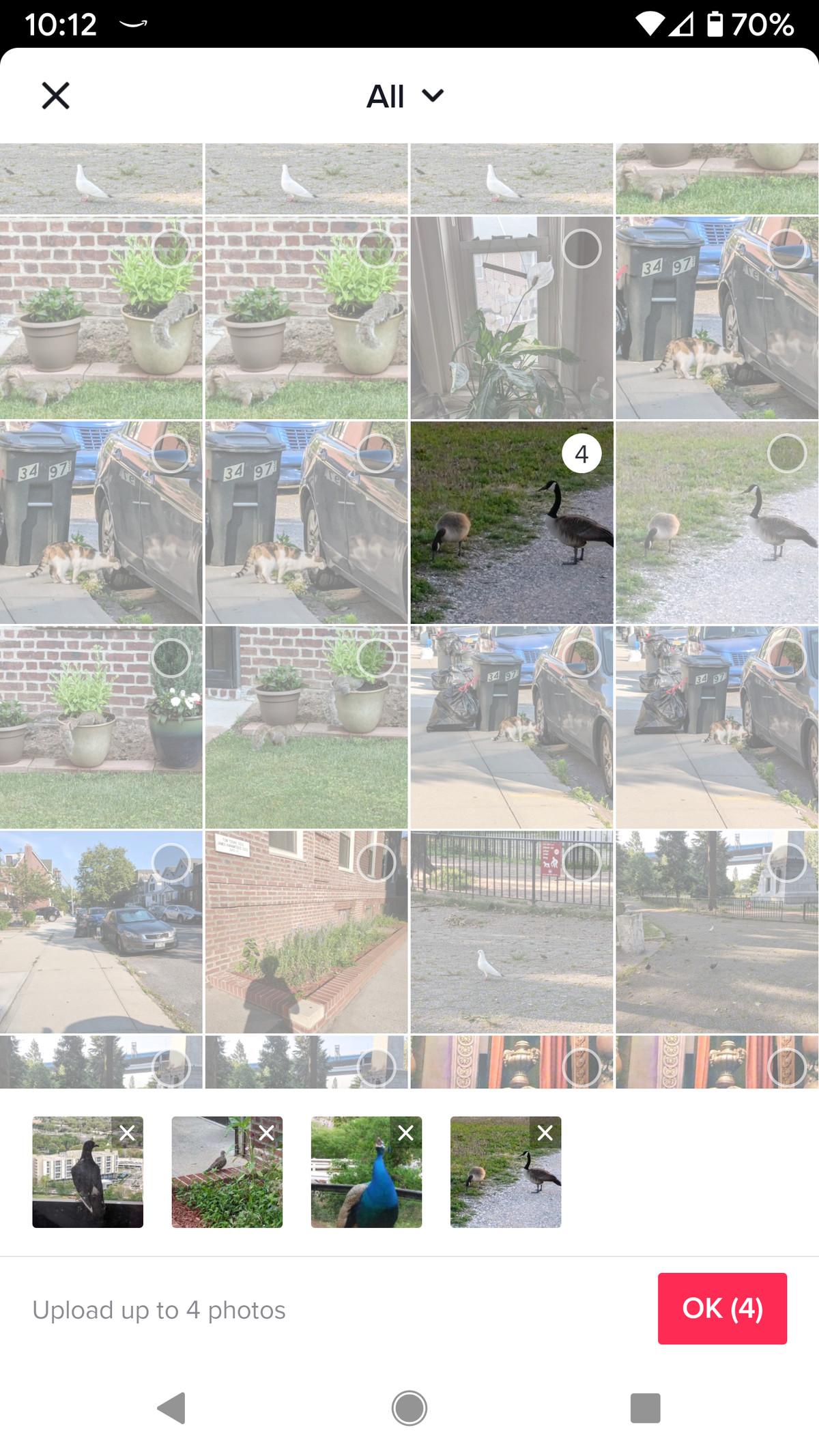 Wählen Sie die Fotos aus, die Sie einschließen möchten.